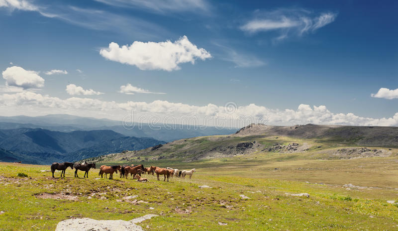 Download Beautiful Landscape With Horse And  Blue Sky. Stock Photo - Image: 24748184