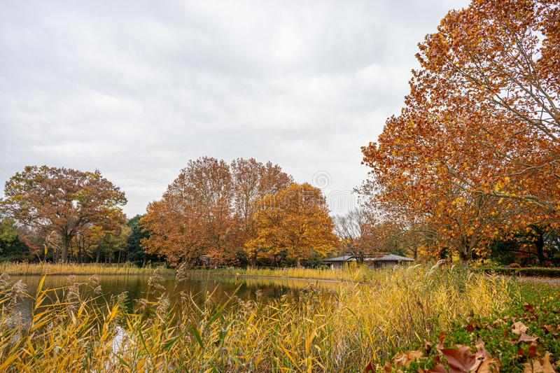 Landscape of Japanese park in autumn royalty free stock photography