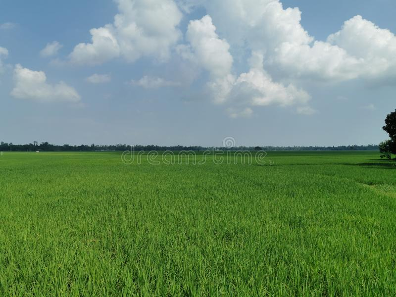 BEAUTIFUL LANDSCAPE OF KURIGRAM  BANGLADESH stock photography