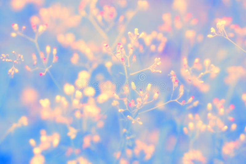Beautiful landscape of little pink grass wild flower ,Abstract spring nature background stock image