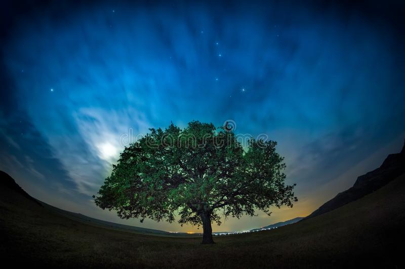 Beautiful landscape with a lonely oak tree, dramatic clouds and a starry night sky with moon light stock photo
