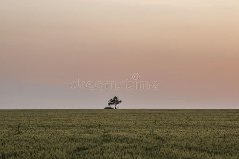 Beautiful landscape, lonely tree in green field, beautiful pink sunset, horizon is clearle visible. Bulgaria stock images