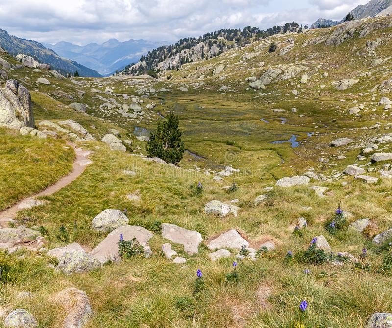 Beautiful Landscape with Lupin flowers  in the Pyrenees stock photos