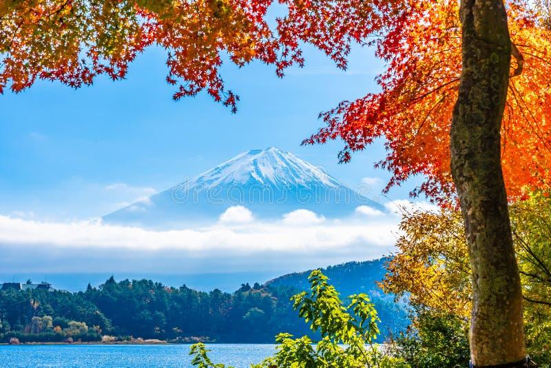 Beautiful landscape of mountain fuji with maple leaf tree around lake. In autumn season royalty free stock photo