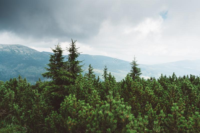 Idyllic Meadow Nice Weather Stock Images