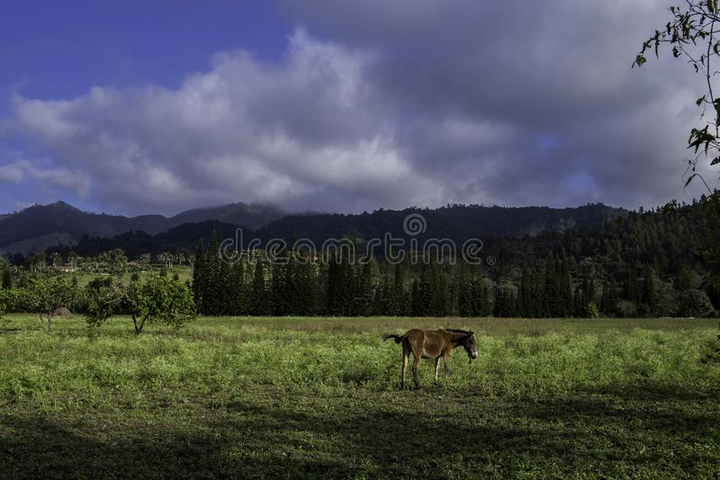 Beautiful countryside landscape royalty free stock images