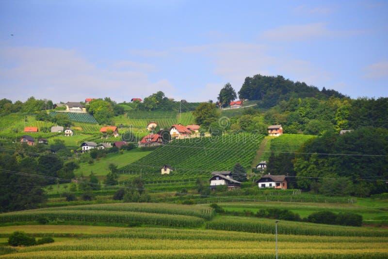 Beautiful landscape Novo Mesto district Slovenia Europe. Corn fields and hillside vimeyards and small village -Dobovo seen from A2 motorway-Dolenjska avtocesta stock photos