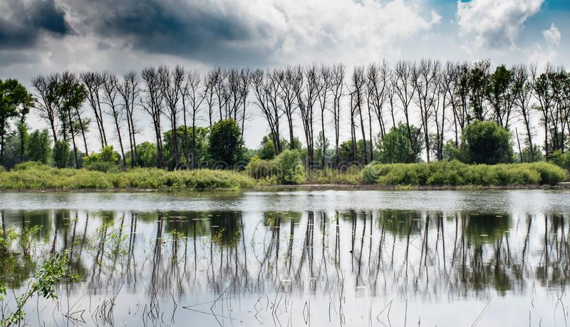 Beautiful landscape panorama view of the forest reflected on the river`s surface during summer day stock images