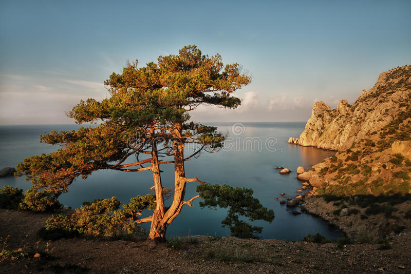 Beautiful landscape with pine, sea and cliffs in Crimea stock photo