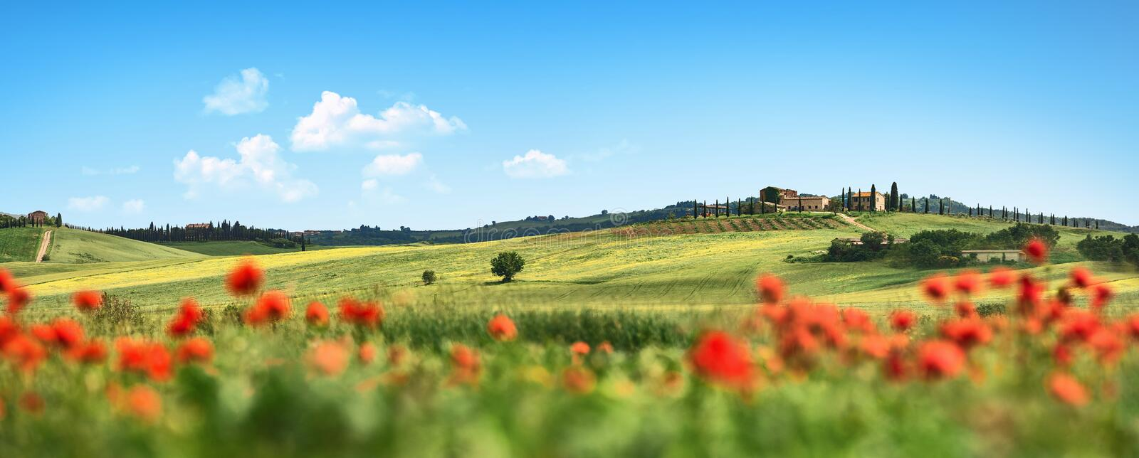 Beautiful Landscape with Poppies Flowers. Italy Tuscany stock photography