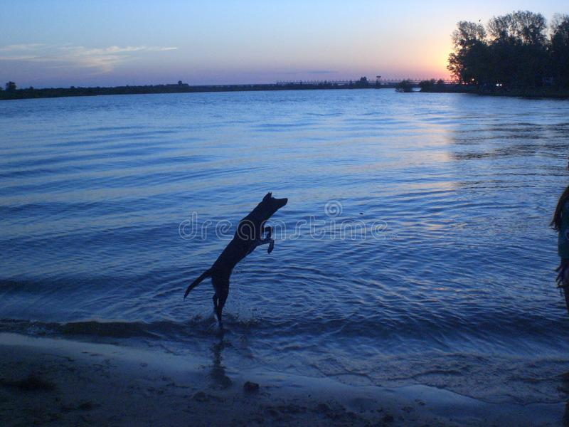 Beautiful landscape of the river outdoor with dog jumping stock photo