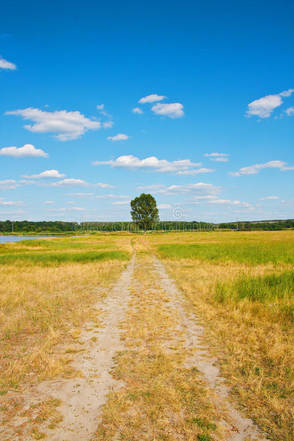 Beautiful landscape. Road to a lonely tree stock photography