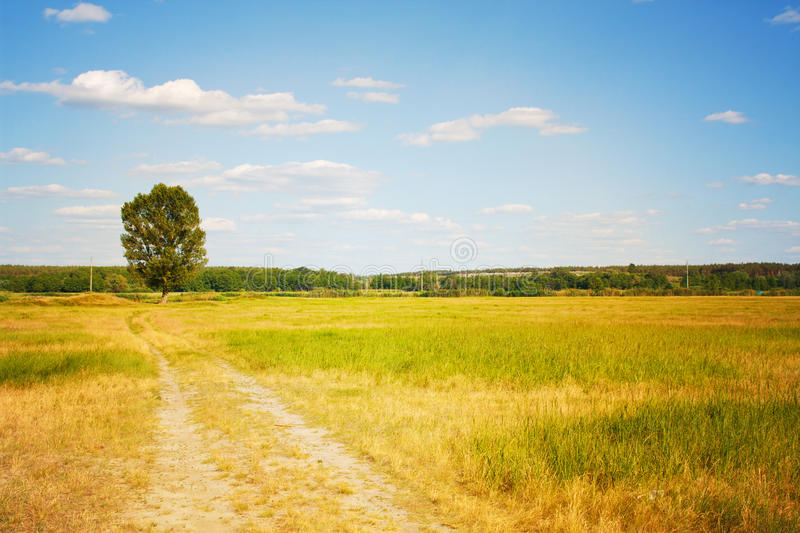 Beautiful landscape. Road to a lonely tree stock photo