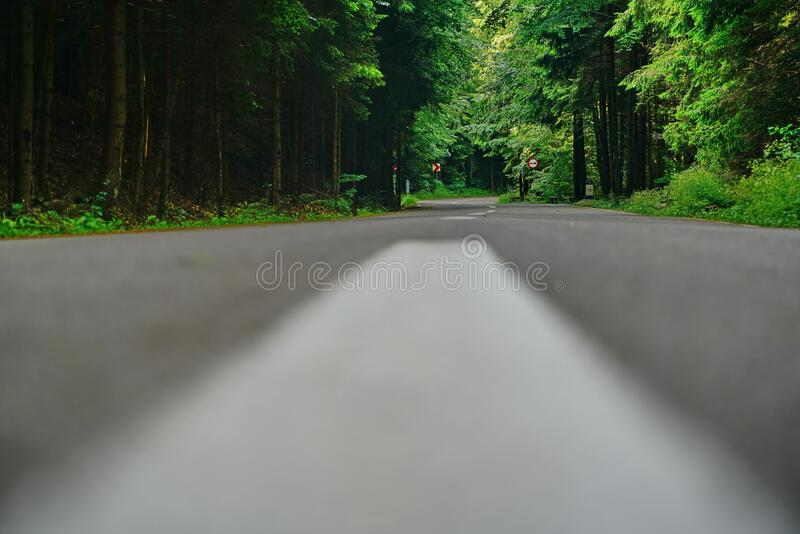 Landscape with road trip in the forest 6 stock image