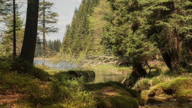 Beautiful landscape scene at the small Arbersee stock image