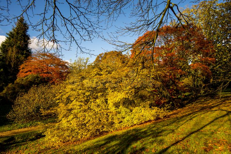 A beautiful display of autumn colours at Wakehurst Place, West Sussex, England. Beautiful landscape scenery at Wakehurst Place in West Sussex, England in autumn royalty free stock photos