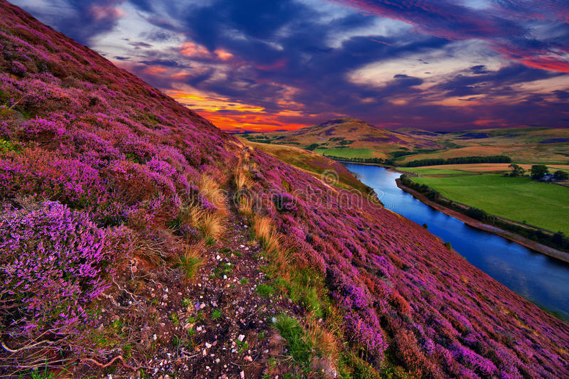 Beautiful landscape of scottish nature royalty free stock image