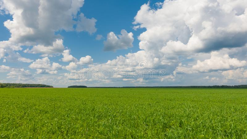Beautiful landscape, sky and green fresh grass. Grass and sky at beautiful day. royalty free stock image