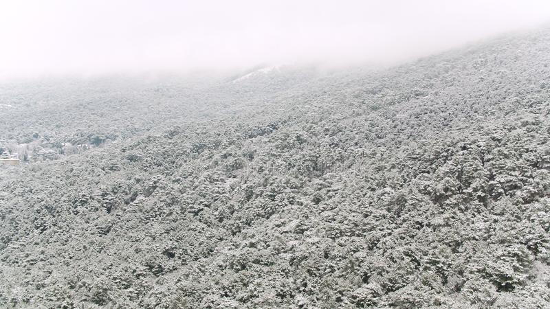 Beautiful landscape with snowy pine trees on a steep mountain slope, Utah, USA. Shot. Foggy hills covered with snowy royalty free stock photography