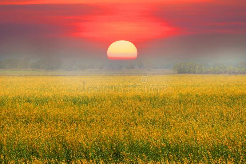 Beautiful landscape with sunset and flower field. stock photography