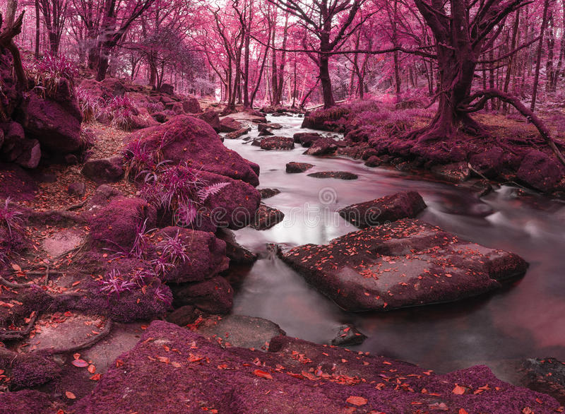 Beautiful landscape of surreal alternate colored landscape through woodlands royalty free stock photo