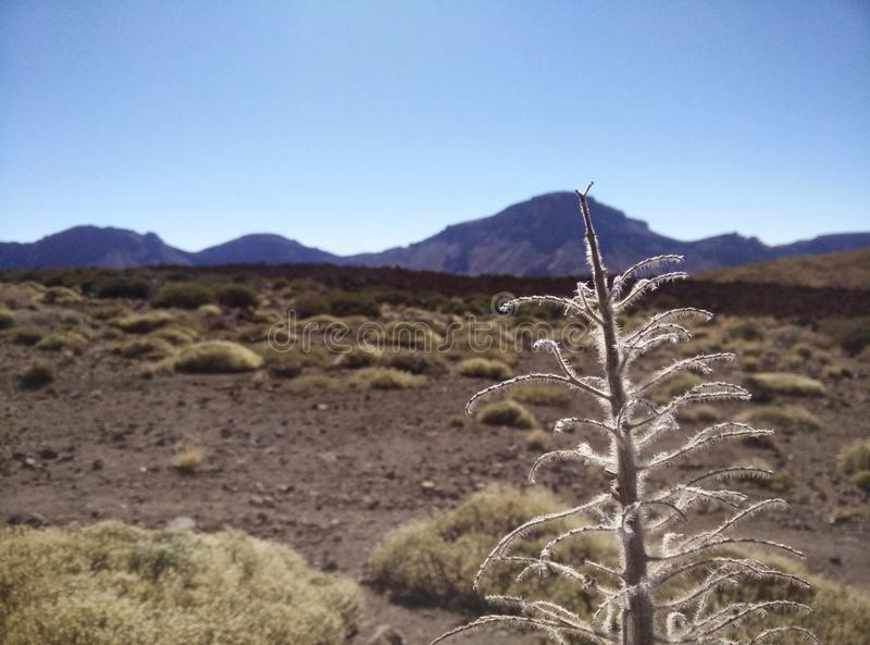 The beautiful landscape on Teide stock images
