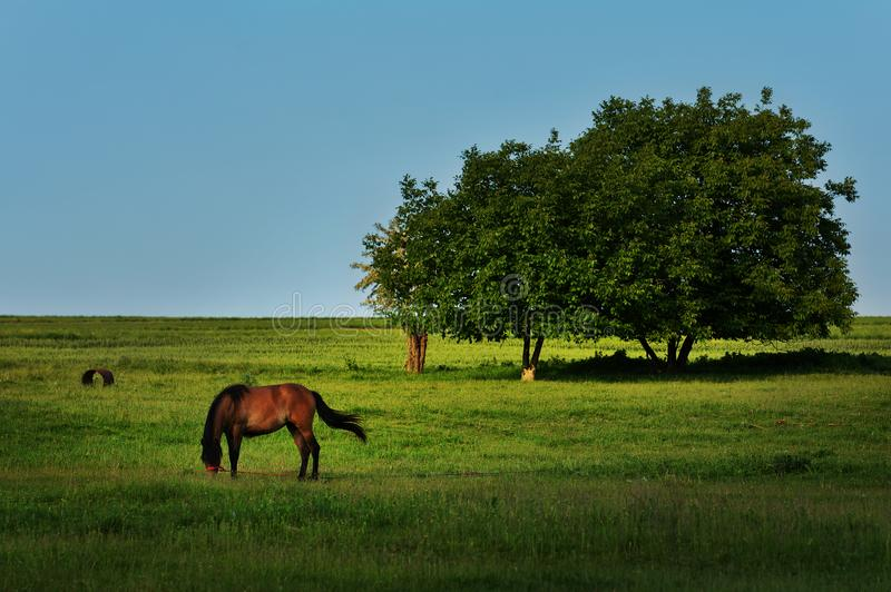 Beautiful landscape with trees and horse grazing in Dobrogea stock photos