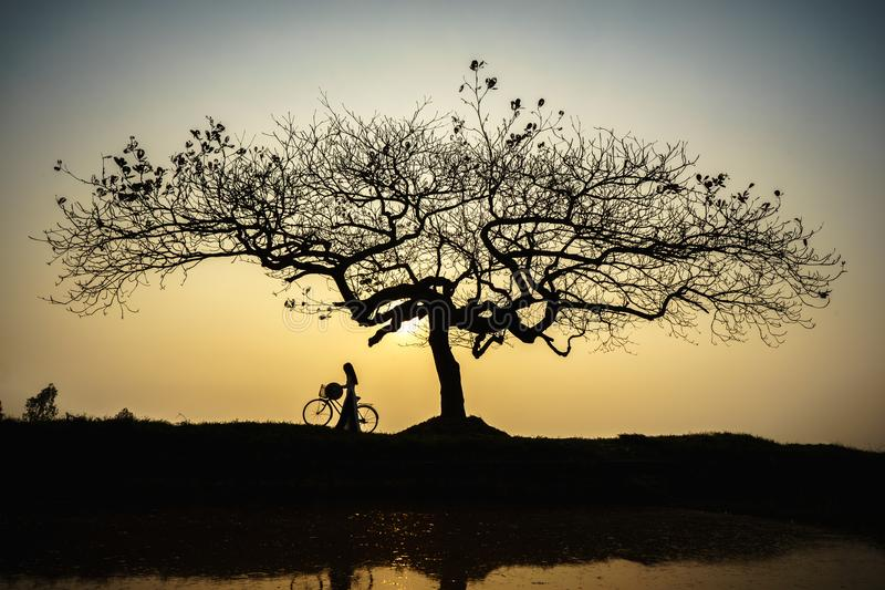 Beautiful landscape with trees silhouette at sunset with Vietnamese woman wearing traditional dress Ao Dai standing under the tree.  stock photography