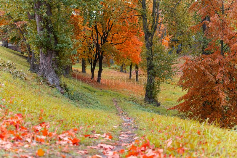 Beautiful landscape view of autumn forest or Park with trees covered with colorful leaves. Wallpaper or desktop design stock photo