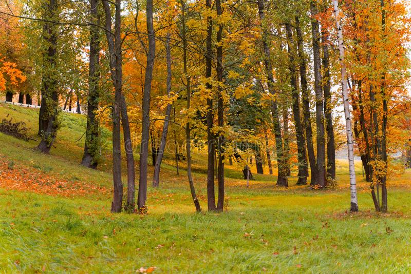 Beautiful landscape view of autumn forest or Park with trees covered with colorful leaves. Wallpaper or desktop design royalty free stock image