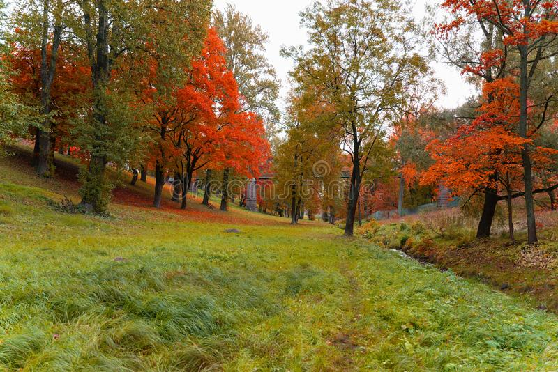 Beautiful landscape view of autumn forest or Park with trees covered with colorful leaves. Wallpaper or desktop design royalty free stock photo