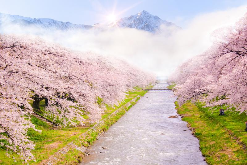 Beautiful cherry blossom or sakura in spring time with Mountain view and sunrise background stock photos