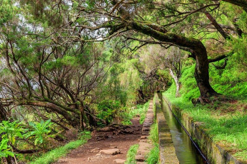 Levada trail Madeira stock image