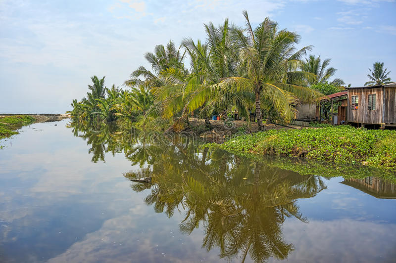 Beautiful landscape view near the river with water reflection on coconut tree stock image