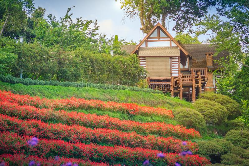 Beautiful landscape view of red flower garden and the small cottage in the forest at Bhubing palace, Chiang Mai, Thailand. stock image