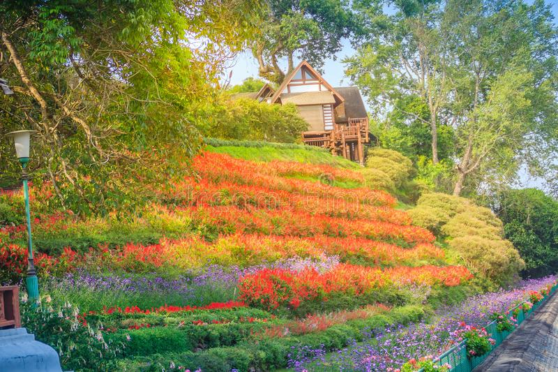 Beautiful landscape view of red flower garden and the small cottage in the forest at Bhubing palace, Chiang Mai, Thailand. royalty free stock photos