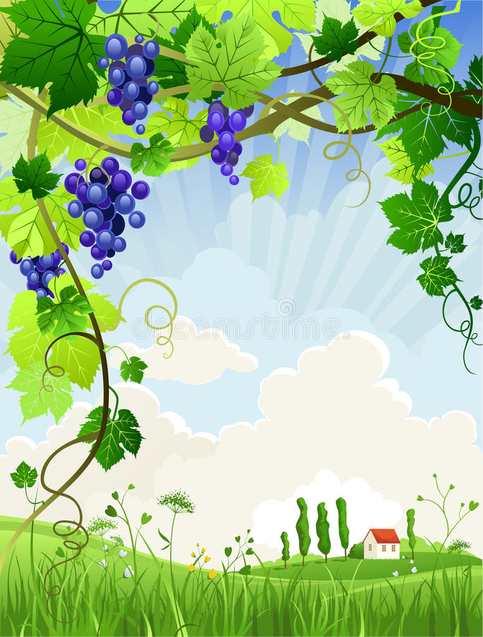 Download Beautiful Landscape With A Vineyard Stock Vector - Image: 21489303