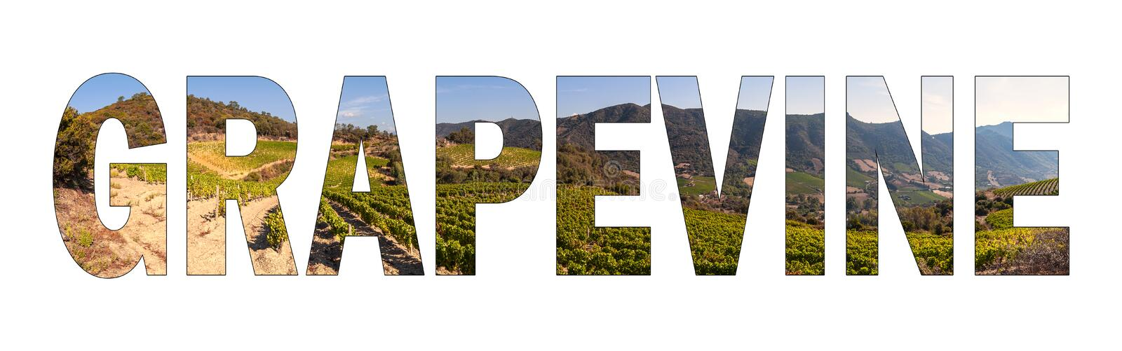 Written GRAPEVINE with background a hilly vineyard of Sardinia, Italy. stock photos