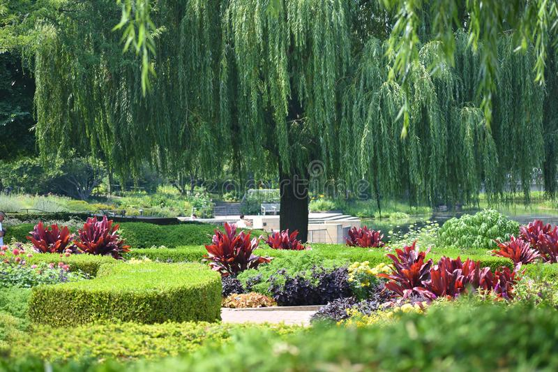 Beautiful Landscape with Willow Tree, Hedges and Burgundy Flowers stock images