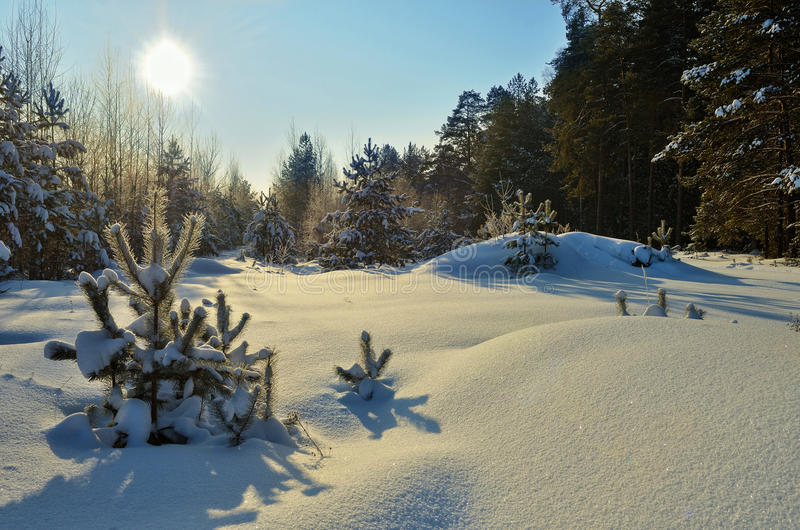 Beautiful landscape winter snowy forest. stock photo