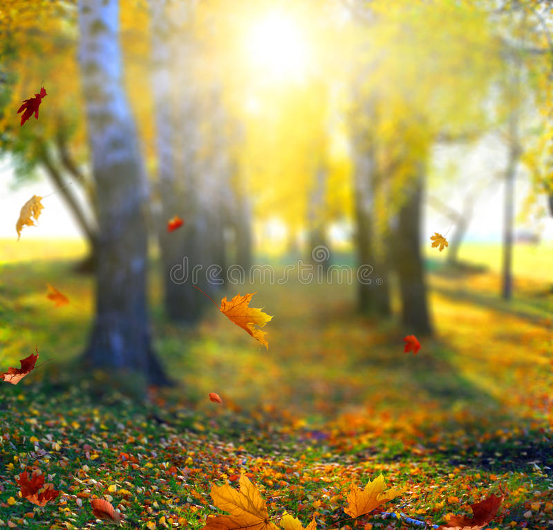 Beautiful landscape with yellow trees,green grass and sun. Colorful foliage in the park. Falling leaves natural background stock image