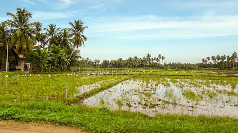 Landscape pictures of Sri Lanka stock image