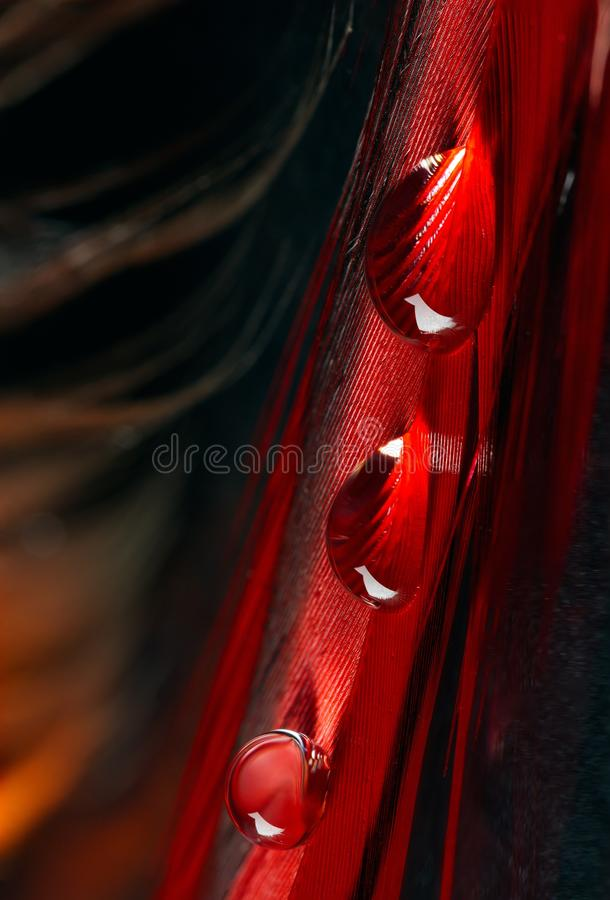Beautiful large dew drops or rain on the poultry feather closeup royalty free stock photos