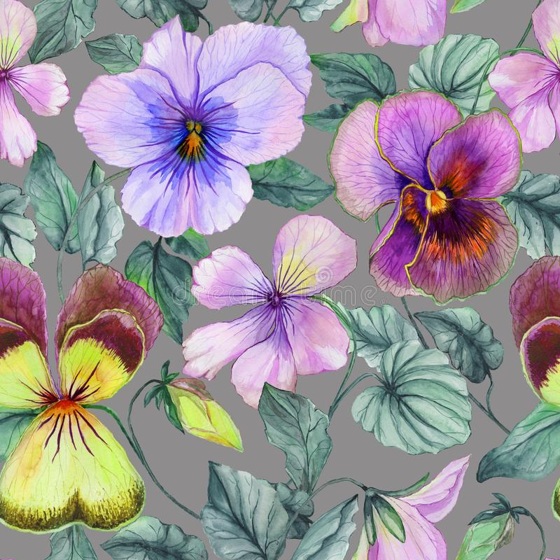 Beautiful large purple and yellow viola flowers with green leaves on gray background. Seamless botanical floral pattern. Watercolor painting. Hand painted royalty free illustration