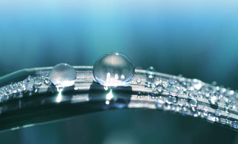 Beautiful large transparent drop of water dew on grass close up. royalty free stock images