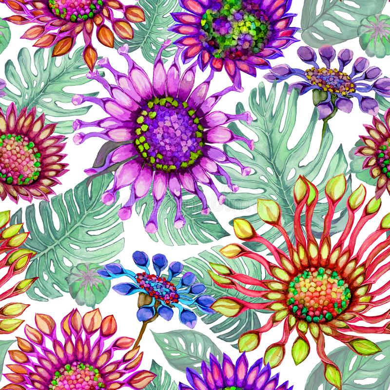 Beautiful large vivid African daisy flowers with green monstera leaves on white background. Seamless bright floral pattern. Watercolor painting. Hand painted stock illustration