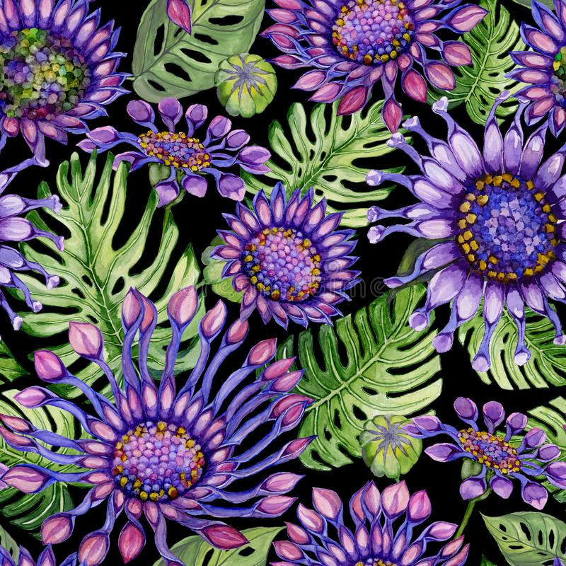 Beautiful large vivid purple African daisy flowers with green monstera leaves on black background. Seamless floral pattern. Watercolor painting. Hand painted stock illustration
