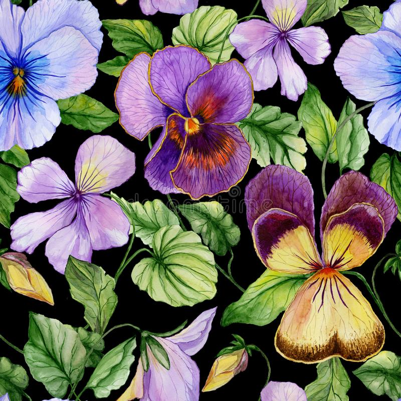 Beautiful large vivid viola flowers with green leaves on black background. Seamless spring or summer floral pattern. Watercolor painting. Hand painted vector illustration