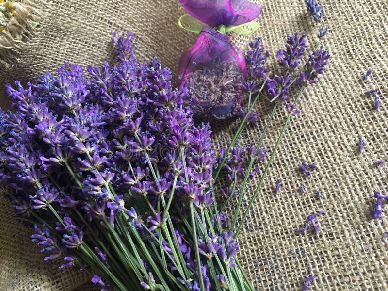 Beautiful lavender flowers stock photos