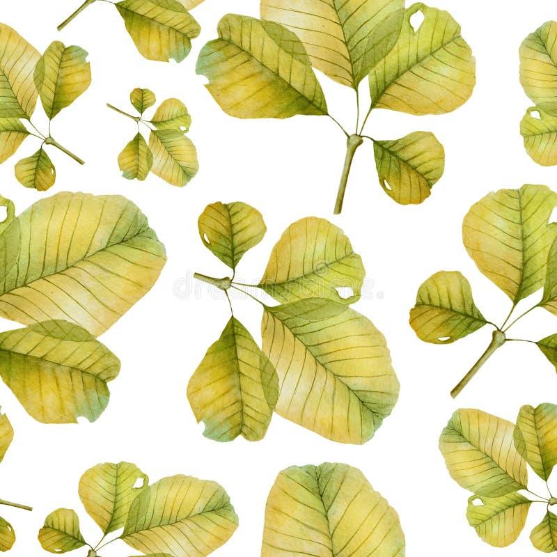 Beautiful leaves of hazel in autumn pattern stock photo